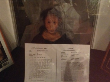 Mummified corpse of a child in the museum