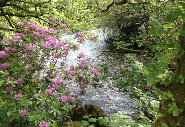 Pink flowers leaning over a stream