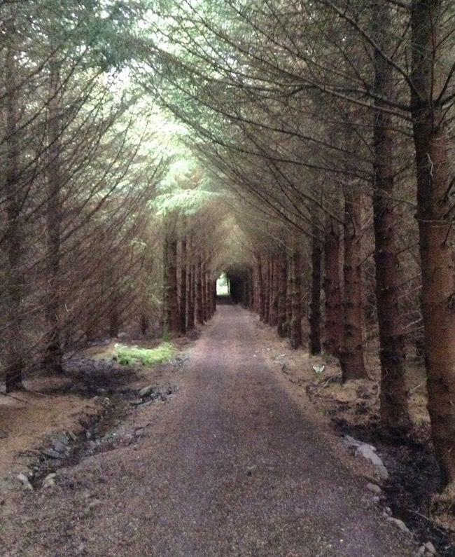 'Tunnel' of trees through forest