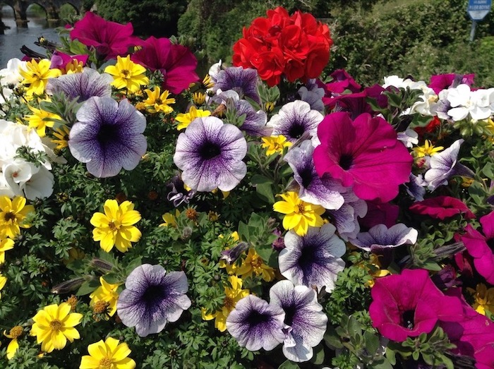 Pink, red, yellow and white/purple flowers