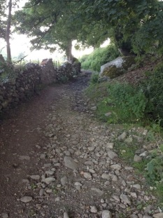 Start of the Roman road, marked by rocks sticking through the mud, overshadowed by a tree
