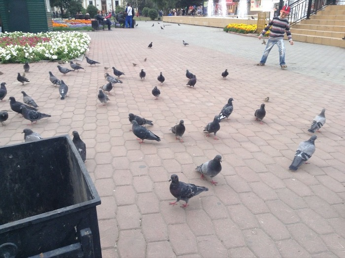 Pigeons gather on a tiled square