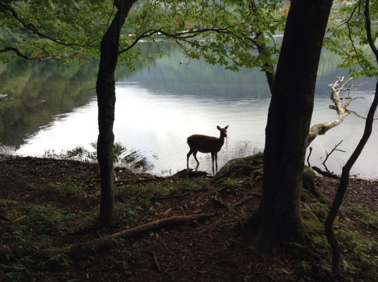 A lone deer pauses, startled, by the waterside