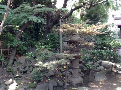 Rockery garden, with greenery growing among the rocks