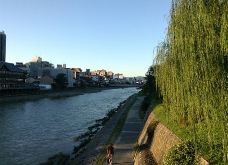 Kyoto riverside, weeping willows hanging to one side