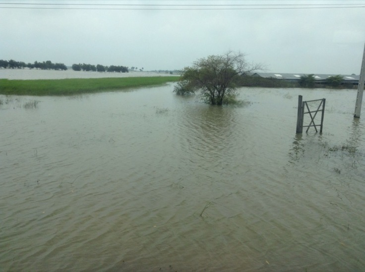 Flooded plain, with a gate and tree poking out of the water