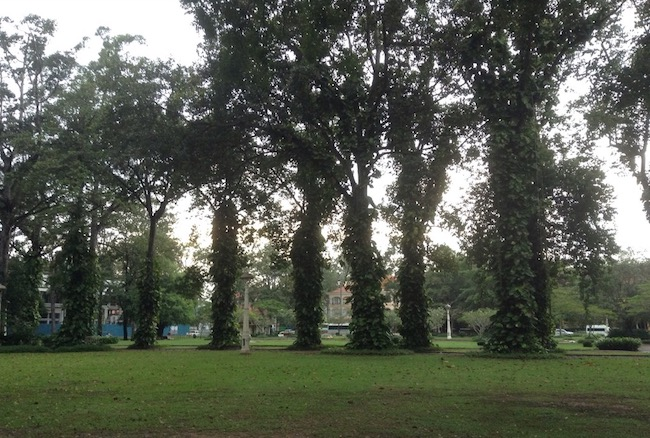 A lawn with tall trees at one end.