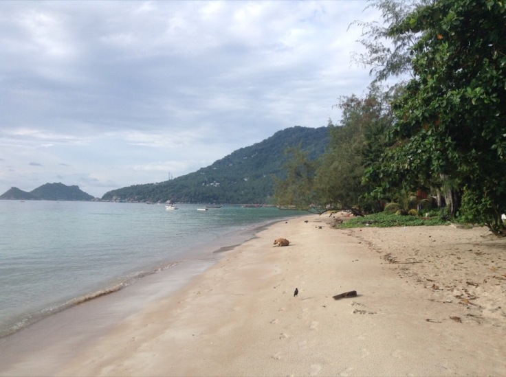 Empty beach, sea to the left, mountain behind, trees to the right