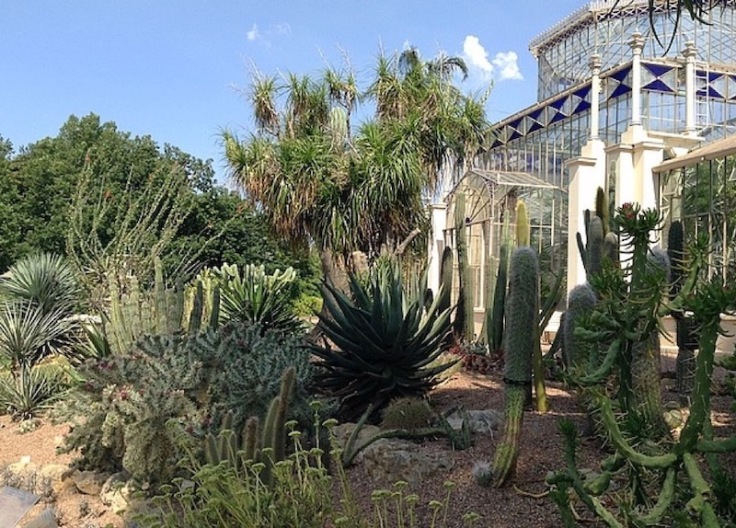 Loads of cacti in front of glassy palm house