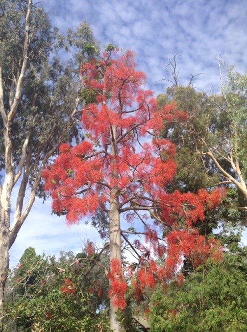 Bright red growth on this tree