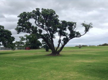 A tree stands almost alone on a wide green, grassed area. Almost from the ground, its branches point out and up in very different directions.