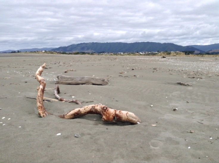 Close up of driftwood on the beach, with hills distant