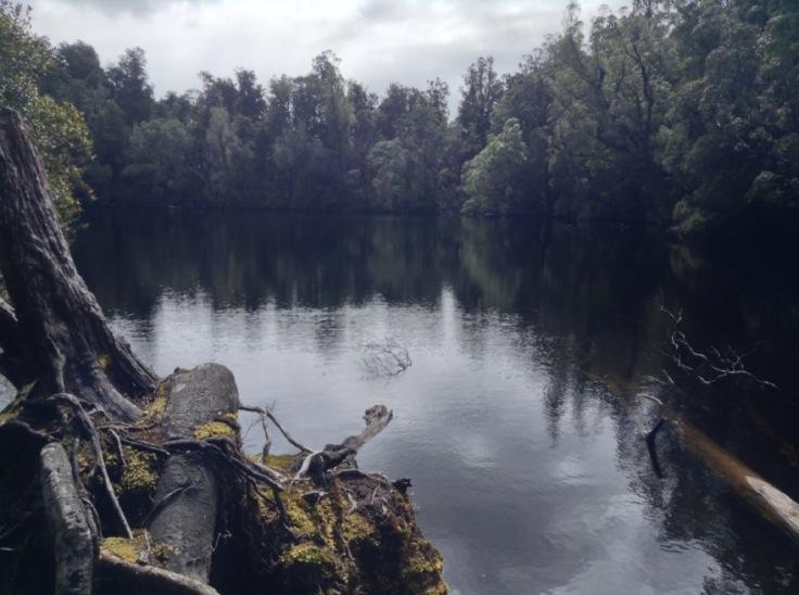 Lake Wombat, trees all around