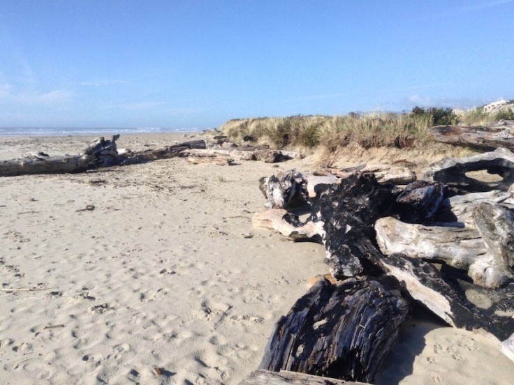 Driftwood on Rockaway beach