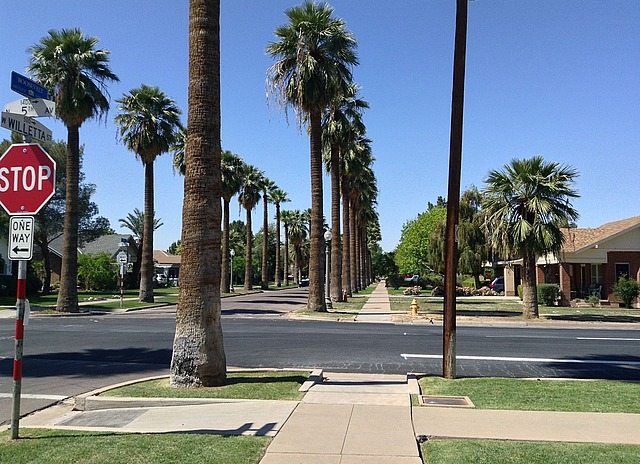 Streets lined with palms