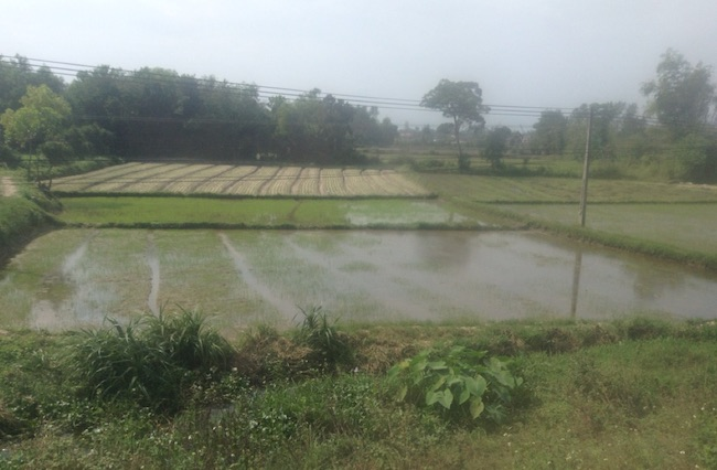 Paddy fields, seen from the train