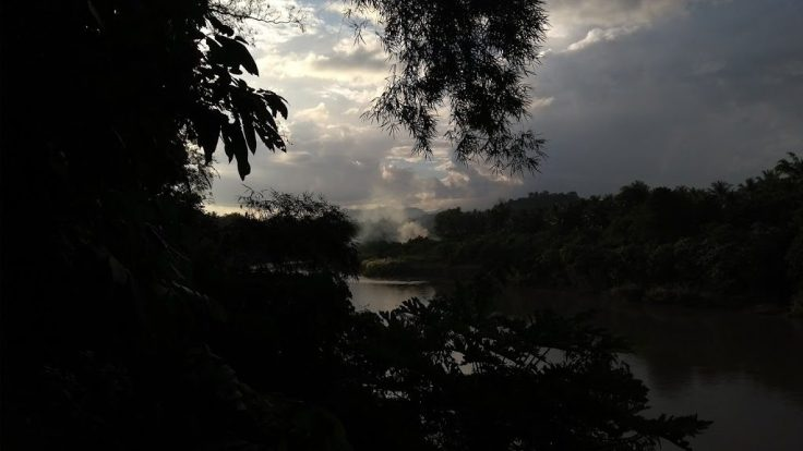 Foliage hangs down and covers the far side of the river at dusk