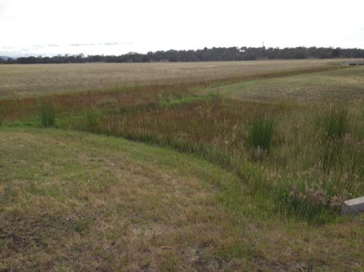 Grass in Tasmania
