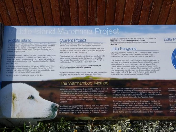Info panel about Maremma sheepdogs, which protect Little Penguins in Warrnambool