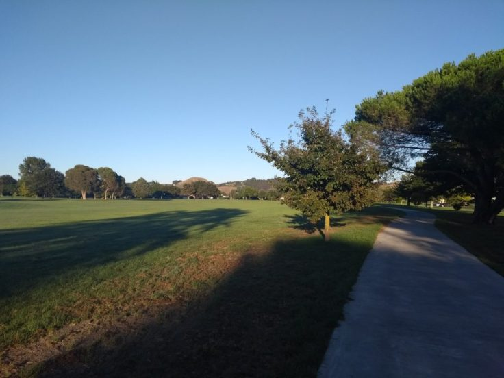 Anderson park, Napier – running the wrong way round the course.