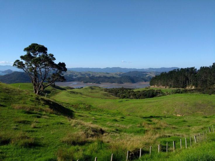 Rolling hills, Coromandel peninsula.