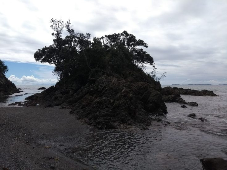 Trees on an outcrop into the sea