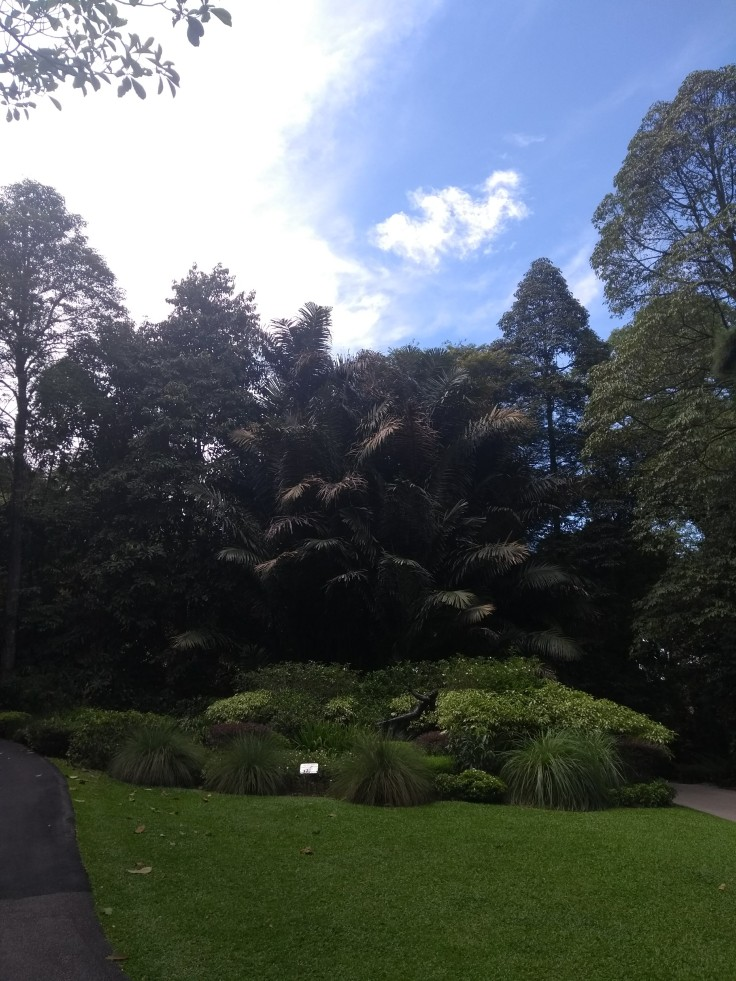 Trees in the Botanical gardens.