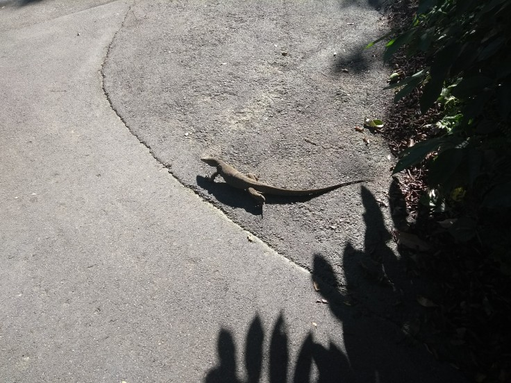 A large lizard on the ground