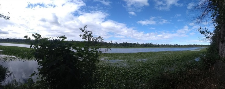 Panorama of Burnaby Lake