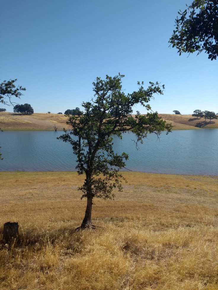 Parched grass, lone tree overlooking the lake.