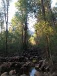 Hunters creek trail