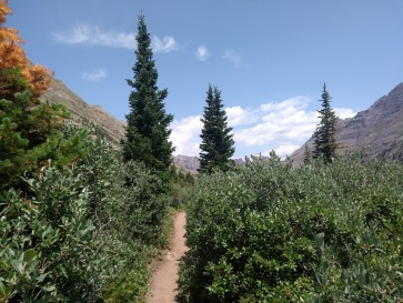 Thick undergrowth, trail, trees, mountains to the sides