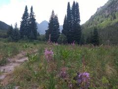 Flowers on the scenic lake loop