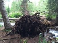 Fallen tree near the creek