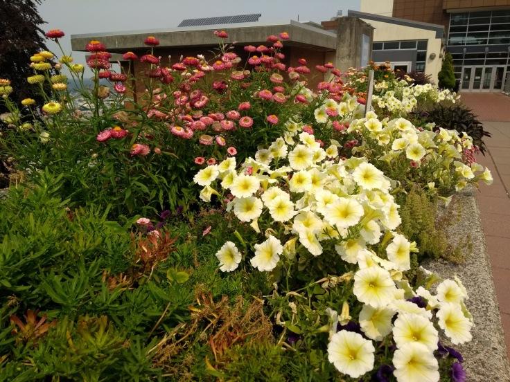 Flower bed, WWU