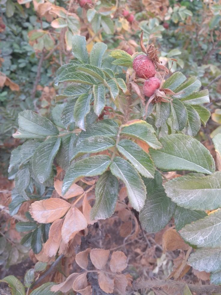 Berry, USA