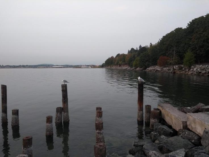 Seagulls sit on posts