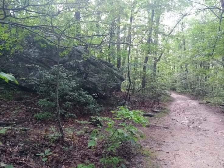 Appalachian trail, en route to McAfee's Knob
