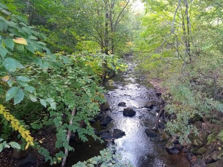 Picturesque stream