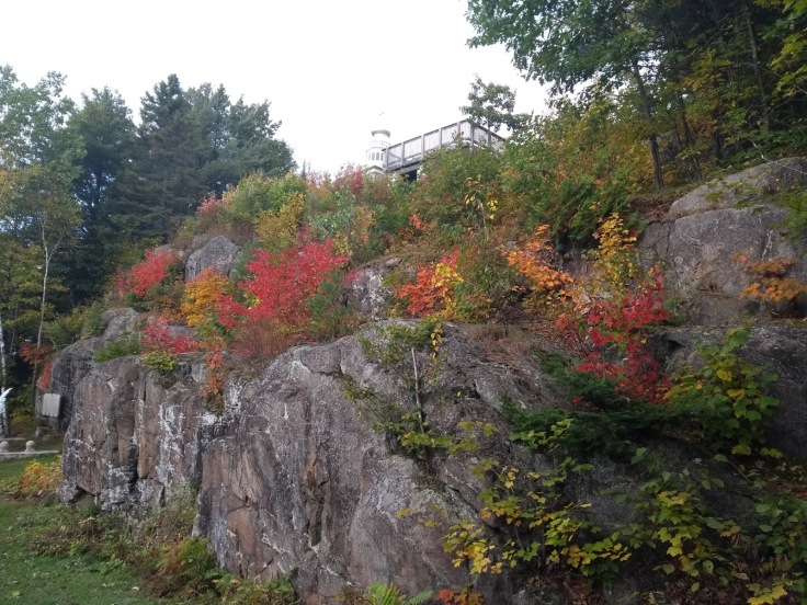 Fall leaf colours sprouting on a rock