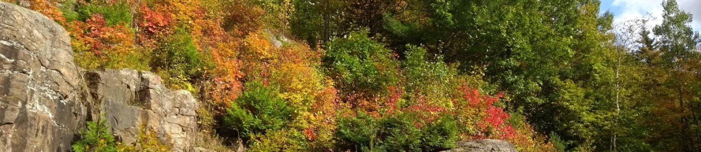 Fall colours on leaves - green, then yellow through orange to red.