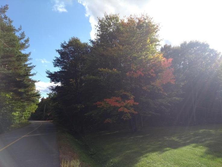 Sun shines on a few red/orange leaves