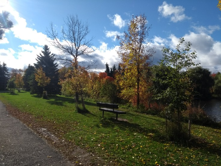 Fall colours along the route