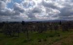 Olive grove, Tavarnelle Val d'Elsa
