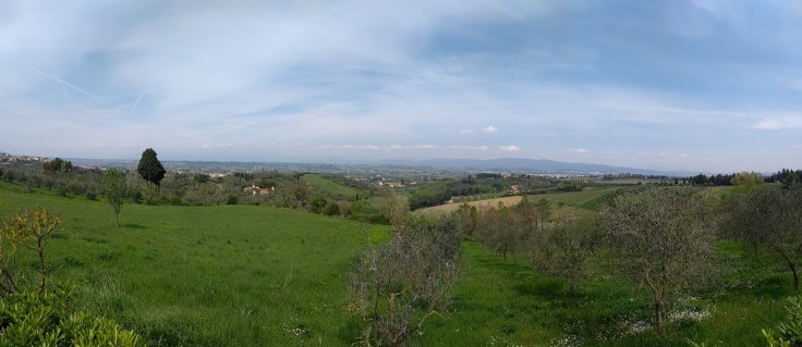 Panorama; green fields, olive trees, blue cloudy sky