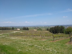 Tuscan agriculture under a blue sky