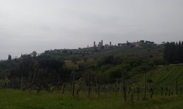 San Gimignano from the valley below, several towers appear small above an olive grove