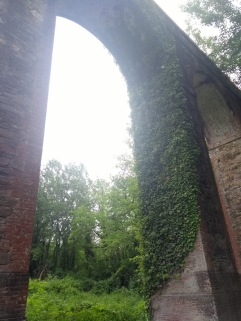 Ivy growing in an arch