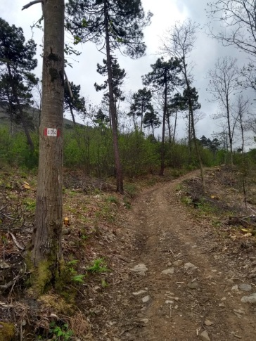 Track climbing through denuded forest