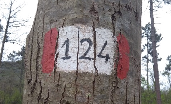 Path 124 marker painted on a tree